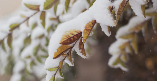 Inclement Weather – Office Policy Update